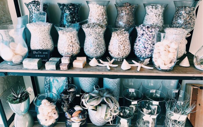 Seashells from Manhattan Beach, CA